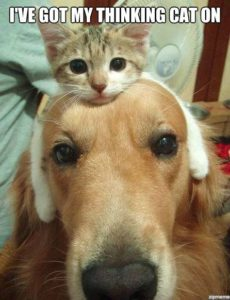 thinking-cat-on